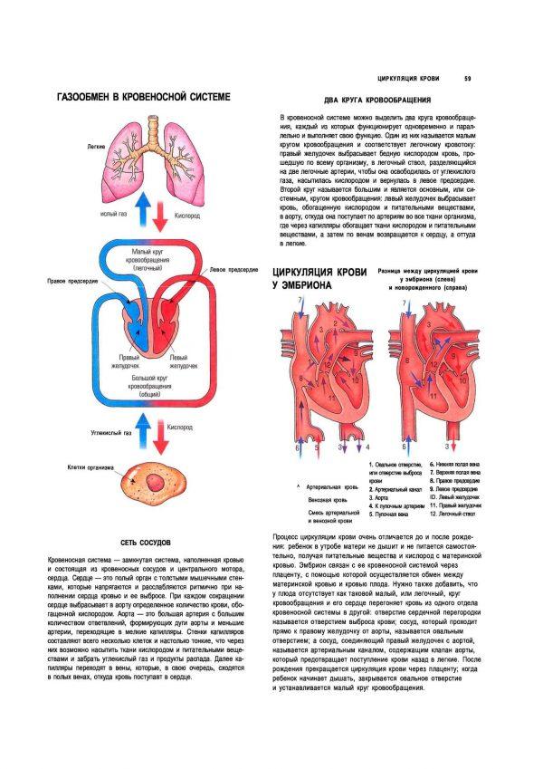 Плакат газообмен в кровеносной системе