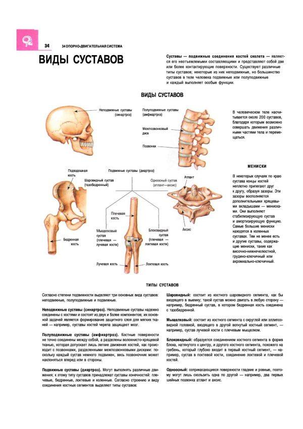 Плакат виды и типы суставов человека