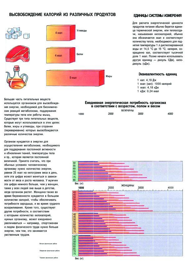 Плакат высвобождение калорий из различных продуктов