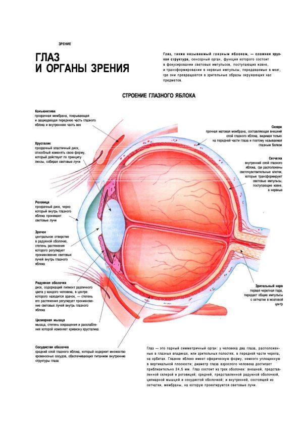 Плакат глаз и органы зрения человека