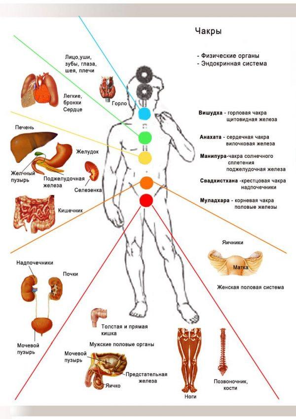 Плакат восточная медицина. Чакры человека и части тела